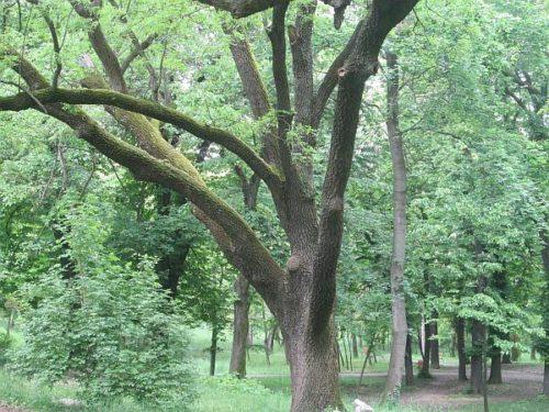 Botanic06