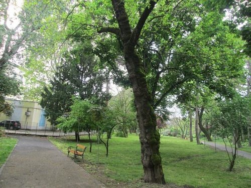 Botanic08